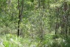 Aberdeen NSW Revegetation 5
