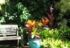 Aberdeen NSW Tropical landscaping 11